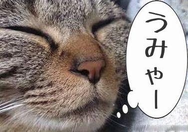 うみゃー 猫