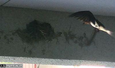 の 縁起 ツバメ 巣