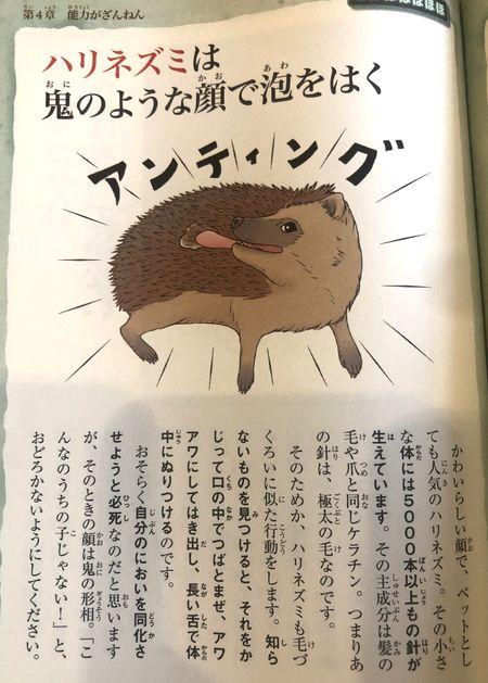 ハリネズミ アンティング イラスト ざんねんないきもの事典
