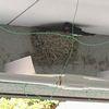 ツバメの巣 カラス対策